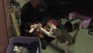 Bu kedi terk edilmiş pitbulla annelik yapıyor