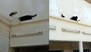 Kediye geri vites yaptıran güvercin