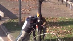 Yalovada ağaç katliamı