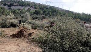 6 bin ağaç kesildi, özel güvenlik köylülere saldırdı