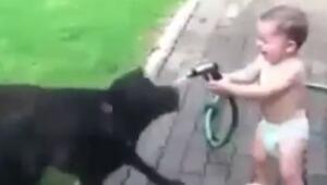 Köpekleri Islatan Yaramaz Bebek