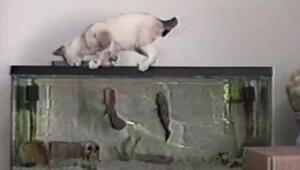 Avcı Kedi