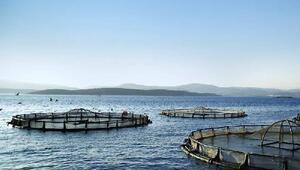 Pınar Balıka deniz dostu belgesi