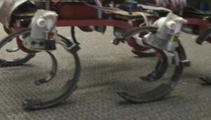 Altı Ayaklı Robot Projesi