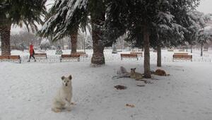 Ek fotoğraflar // İstanbul kar