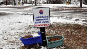 Karabükte sokak hayvanlarına yem