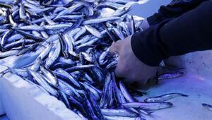 Balıkçılar, denizlerden dolar avlıyor