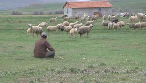 Çanakkale Birlikten Afgan Çoban önerisi