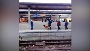 Polis köpeği kadını raylara attı