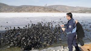 Yaşam ve beslenme alanı azalan kuşlar yemlendi