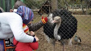 Suriyeli engelli çocuklar, hayvanat bahçesini gezdi