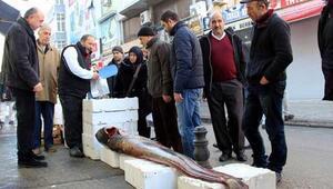 Balıkçılar 2,2 metrelik balık yakaladı