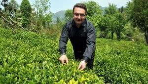 Mehmet Erdoğan: Dünyada organik çay üreten tek ülke olacağız