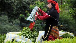 Çayda organik tarım havzası 248 bin dekara çıkarıldı