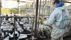 Fransa'da 3 milyon 300 bin kümes hayvanı itlaf edildi