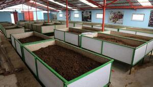Solucan üretimini kömürlükten bin 300 metrekarelik tesise taşıdı