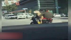Aralarına aldıkları koyunla motosiklet yolculuğu yaptılar