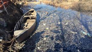 Eberde toplu balık ölümleri
