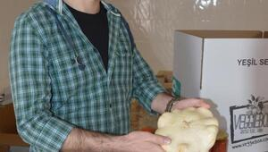 Solucan gübresi, geleneksel tohum ile hayat buldu