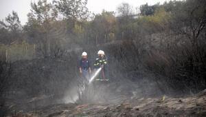 Otoban kenarında orman yangını