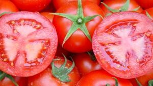 Rusyanın almadığı domatesler o ülkelere gitti