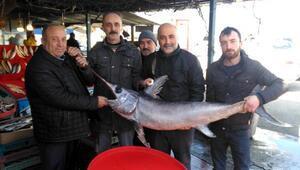 Tezgahta kılıç balığı ilgi gördü