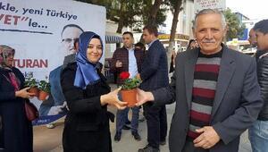 Biga'da AK Parti 4 bin çiçek dağıttı