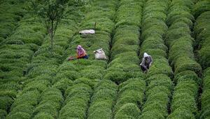 Çay İhtisas Borsası satışa başladı