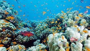 Mercan ağarması nedir, nasıl meydana gelir