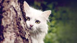 İmdat Kedim mahsur kaldı