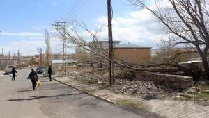 Ardahanda fırtına çatıları uçurdu, ağaçları yıktı