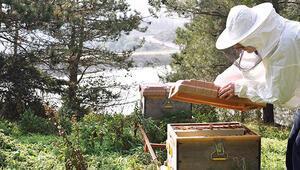 Arılardan iş kurdu