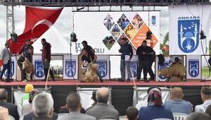 Ulusal Kırkım Şampiyonasında en iyi kırkımcılar belirlendi