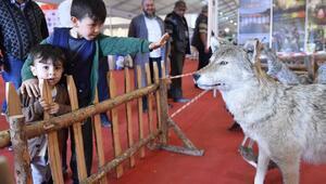 Anadolu Çoban Fuarı