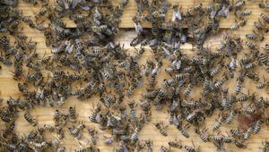 Evinden 120 bin arı çıktı