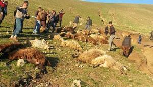 Ağrıda sele kapılan 70 koyun telef oldu