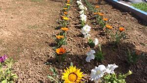 Edremit çiçeklerle rengarenk olacak