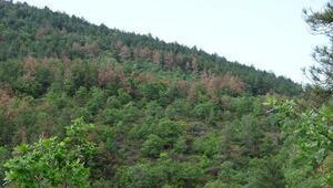 Çanakkalede kuruyan ormanlara inceleme
