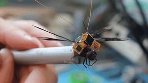 Böcekler bir bir dronea dönüşüyor