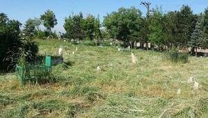 Vandaki mezarlıklarda temizlik çalışması başlatıldı