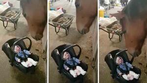Bebek bakıcılığı yapan at görenleri şoke ediyor