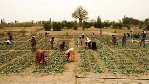 FAO ve UNV aralarındaki işbirliğini artıracak