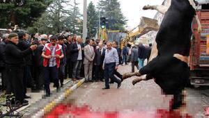 Yol ortasında kurban kesen belediyeye 8 bin lira ceza