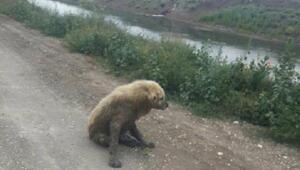 Kanalda çamura saplanan köpeği itfaiye kurtardı