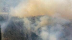 Milasta tarım alanında çıkan yangın ormanı da yaktı