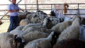 Et ithaliyle yerli üretici pazarını kaybedecek