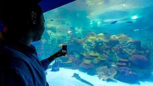 Sualtı Hayvanat Bahçesi yaz günlerinde serinletiyor