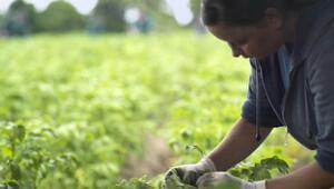 Stefan Hipp Organik tarım felsefemiz haline geldi