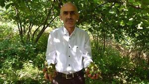 Giresun Ziraat Odası Başkanı Karan: Fındıkta dökülme tedirgin ediyor