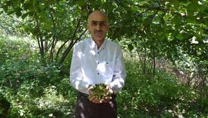 Giresun Ziraat Odası Başkanı Karan: Rekolte çalışması yeniden yapılmalı